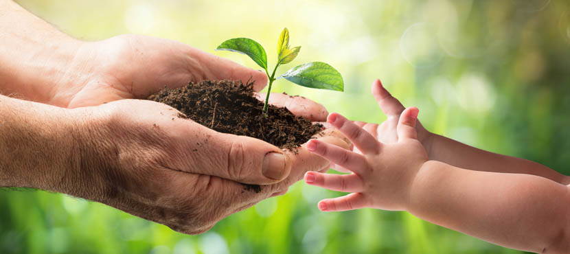 Photo of hands handing over a plant with soil